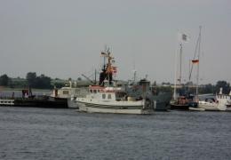 Lillebjørn - 31. juli 2010